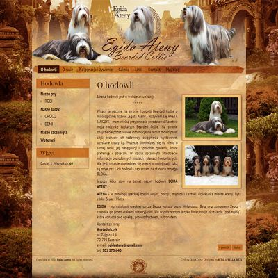bearded-collie.pl